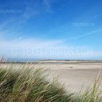 Dunes / Duinen 06