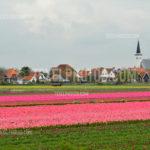 Texel Den Hoorn 03