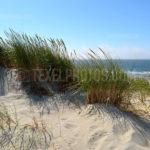 Dunes / Duinen 08