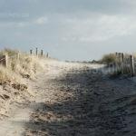 Dunes / Duinen 04