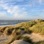 Dunes / Duinen 12