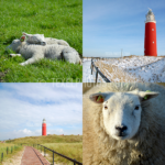 Texel collage 01