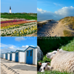 Texel collage 05