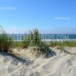 Dunes / Duinen 17