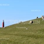Lighthouse / Vuurtoren 12