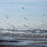 Seagulls / Meeuwen 08