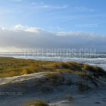 Dunes / Duinen 19
